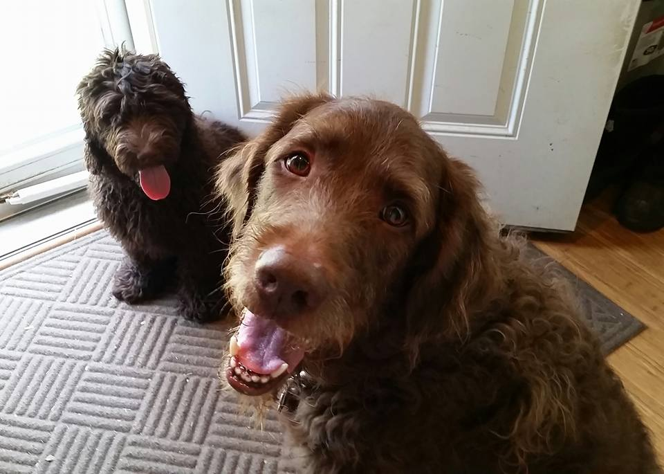 Bosco and Guinness - Our sweet boys. BarkBox brings them joy!